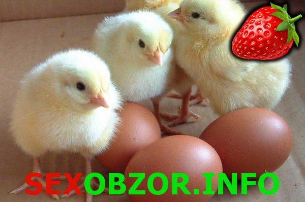 Использование куриных яиц в сексе!